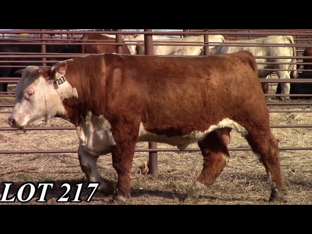 Mead Angus Farms Lot 217