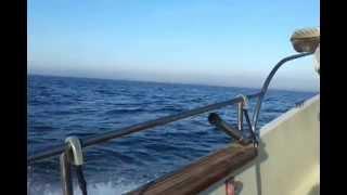 Video Pesca Embarcada TEAM MEGA FISHING download MP3, 3GP, MP4, WEBM, AVI, FLV Desember 2017
