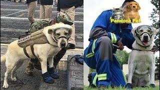 大地震が起きたメキシコで、多くの人に希望を与えた救助犬、フリーダ。 - Pandora Pet thumbnail