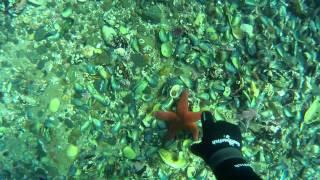 Подводная охота на Кольском часть 1-я