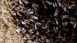 Panal de abejas // Honeycomb