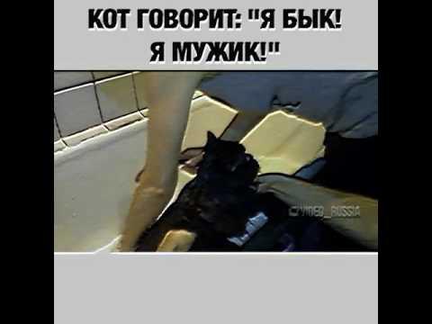 Мультик когда моют кота