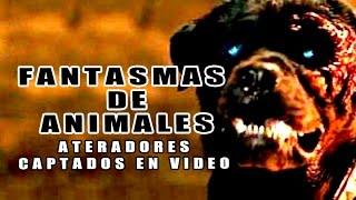 Fantasmas de Animales Aterradores Captados en Vídeo l Pasillo Infinito