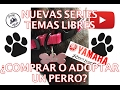 TEMAS LIBRES - 1 ¿Comprar o adoptar un perro?