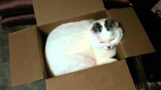 ちょうどいい大きさの、小さな箱を置いていたら、思ってた通りにネコさ...