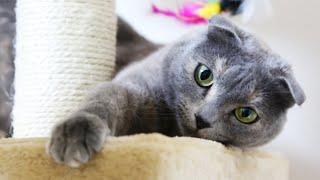 Кошка смотрит мультики Сat watches cartoons