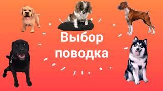 ЛУЧШИЙ ПОВОДОК для дрессировки!  Какой поводок выбрать собаке?
