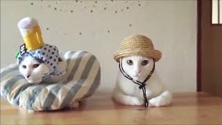 FUNNY ANIMALS DOGS CATS VIDEO - Funny Animals Funny Pranks Funny Fails #23