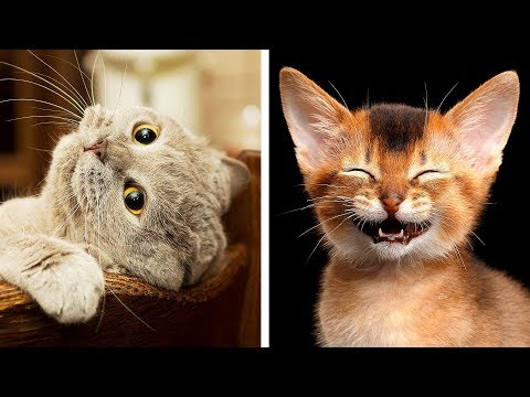 10 Most Dangerous Cat Breeds That're Still Awww