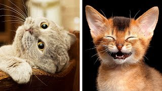 10 Most Dangerous Cat Breeds That're Still Awww