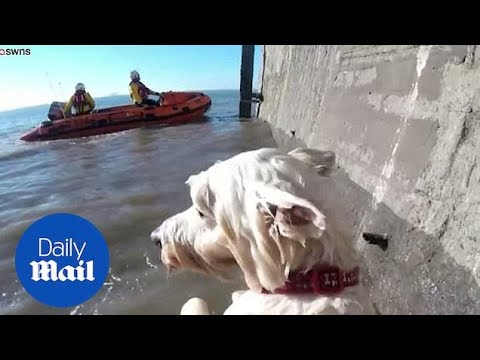 Adorable Highland Terrier Pooch Rescued After Being Cut Off By Tide