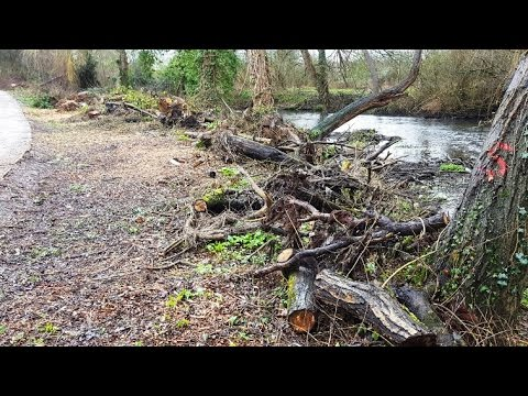 River Colne - Environment Agency Tree and Riverbank Destruction