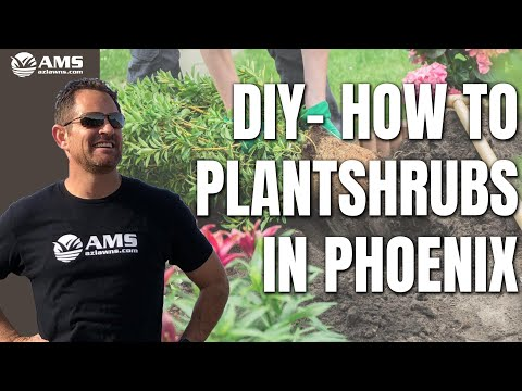 DIY How to Plant Shrubs in Phoenix