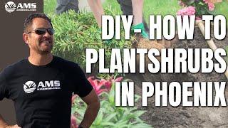 DIY How to Plant Shrubs in Phoenix