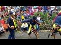 Mendeman Ebeg WAHYU TURONGGO SETO Wanakropo Somagede (9)