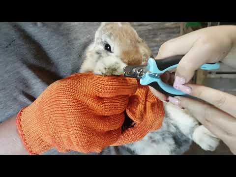 Подрезаем когти кролику. Уход за животными