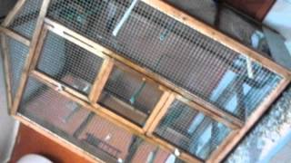 Vendo jaulas de madera para pajaros.