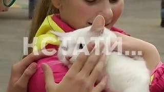 Самый самодостаточный кот Нижнего Новгорода - кот Кефир