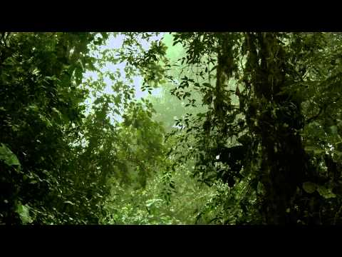 Modern Nature Trailer