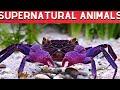 Top 10 Supernatural Animals in Philippines