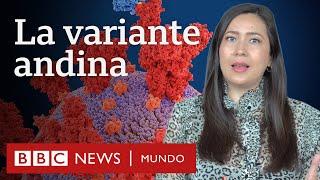 Coronavirus: qué se sabe de la variante lambda (andina) que circula en América Latina