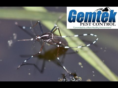 Boise Mosquito Control and West Nile Virus in Idaho