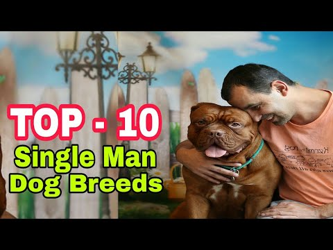 TOP-10 Best Dog Breed For Single Mans / Popular dog breeds / Aryan Dog Club Aryandogclub