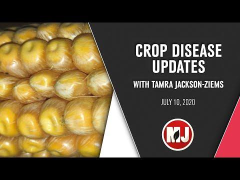 Crop Disease Updates   Tamra Jackson-Ziems   July 10, 2020