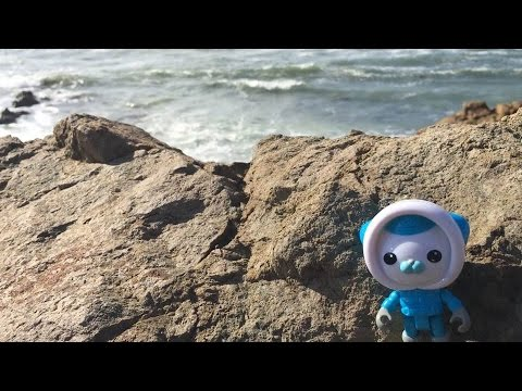 Kids Travel Family Vlog, Los Angeles to San Francisco California Coast Trip Elephant Seals Morro Bay