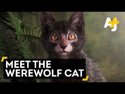 Nature's Strangest Cat Breed?