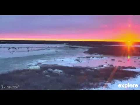 141028 Polar Bear Snoozing During Sunset