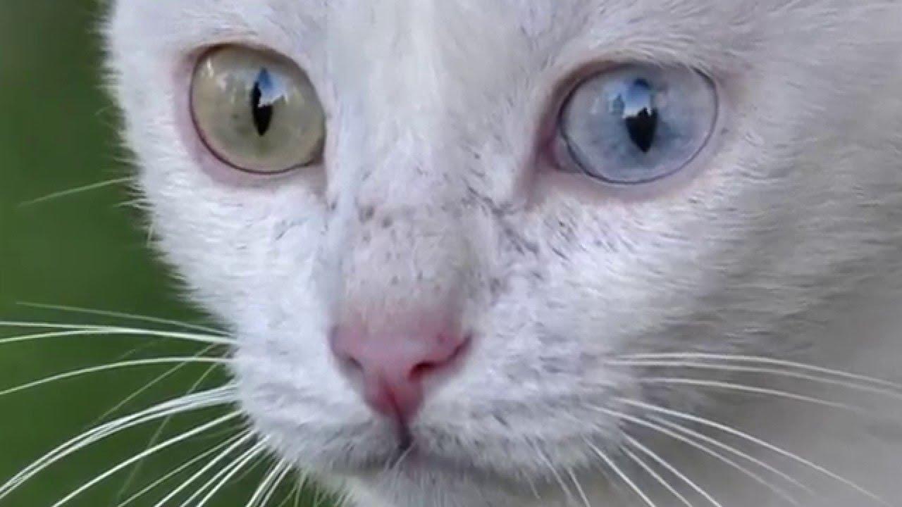 Turcja Koty Van Cats Van Youtube