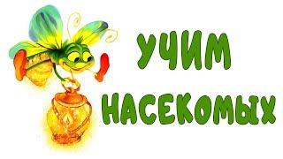 Учим Насекомых На Английском и Русском. Английский Язык для Детей. Обучающее Видео.
