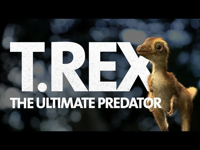 What Did a Baby T. rex Look Like? 🦖 Find out in T. rex: The Ultimate Predator (Opens 3/11)