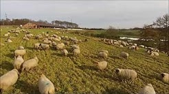 Schlaflos? Schafe zählen!- Sleepless? Sheep counting – lustig funny - DJI Phantom Vision