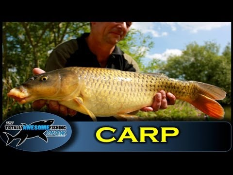 How to catch Carp on a Pellet Feeder - The Totally Awesome Fishing Show