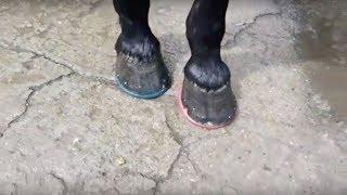 Ковка передних и задних копыт, на подковы HorseMaster sapphire
