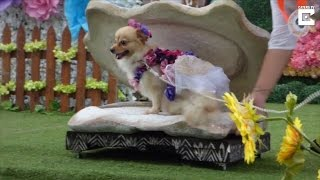 Watch These Pets Strut Their Stuff in High Fashion on the Catwalk