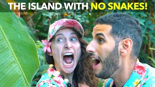 The Island with No Snakes!