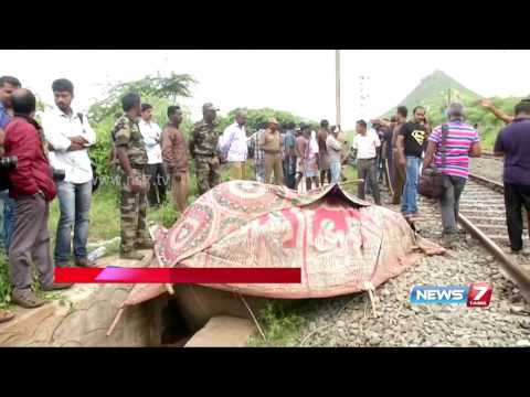 Elephant dies after colliding with express train at Coimbatore | News7 Tamil