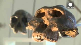 ◄|شاهد| «متحف البشرية» يعيد فتح أبوابه في باريس: «الإنسان ينتمي لمملكة الحيوانات» - المصري لايت