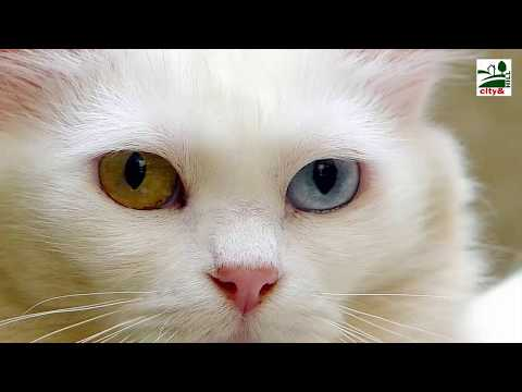 10 The Most Beautiful Cats In the World