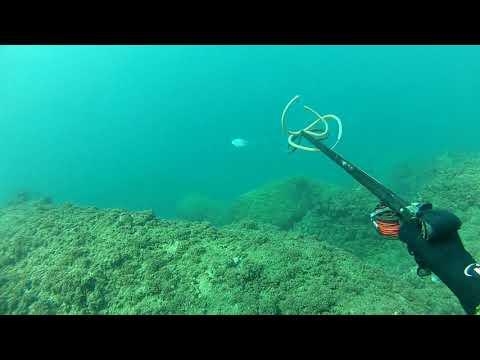 Blue Runner Spearfishing