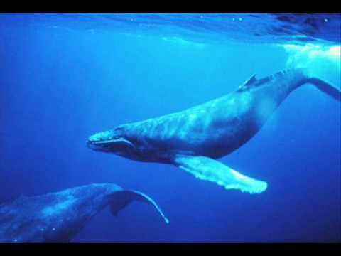 Chant des baleines - whales singing