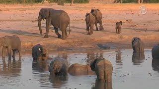 Принц Уильям встал на защиту животных Африки (новости)