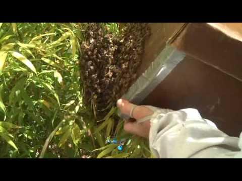 Bee Swarm 4/11/2009