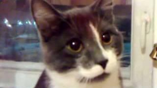 прикол! кошка жрет грибы