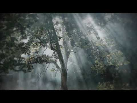 Zielono mi [Live] feat. Atom String Quartet & Michał Dąbrówka
