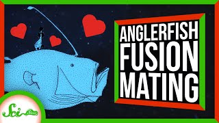 How Anglerfishes Become One With Their Partners