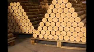 Bán mùn cưa, mua mùn cưa, mùn cưa thông,pine wood sawdust